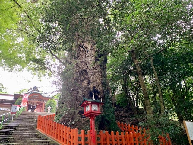 https://kagoshima.onpara.jp//photo/999998/0/3699450.jpg