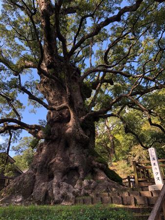 日本一の巨樹『大クス』と蒲生の町歩きで満たされる。