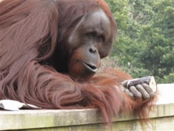 鬼は~外!かわいい動物たちの節分行事in平川動物公園