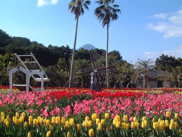 指宿のフラワーパークで、ひと足早い春を満喫!チューリップ展開催