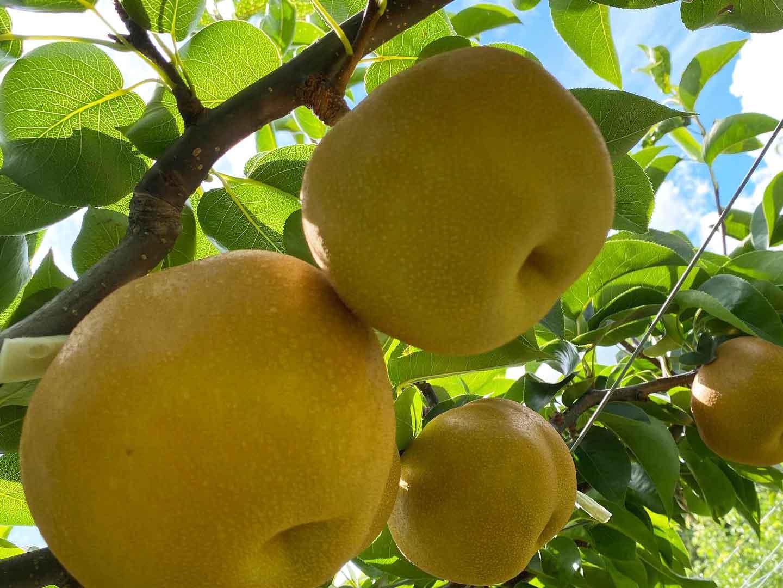 ランド 霧島 フルーツ 暑い日にピッタリのレモンソルベ